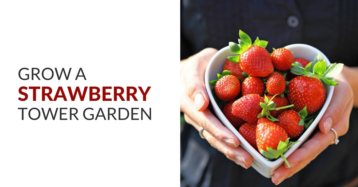 grow a strawberry Tower Garden